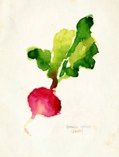 Watercolor radish by Yuminette