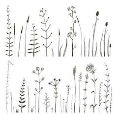 Sketchy Wild Field Flowers And Grass On White Stock Vector - Illustration of leaves, elements: 52804255 Photo about Rustic colorful meadow growth illustration set. Vector Illustration of nature, grass, natural - 52804255 Doodle Drawings, Doodle Art, Flower Drawings, Wildflower Drawing, Botanical Line Drawing, Botanical Illustration, Floral Drawing, Plant Drawing, Grass Drawing