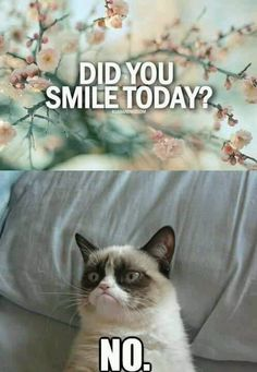 Grumpy Cat - Did you smile today?