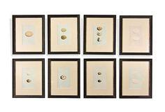 Framed Antique Egg Prints, Set of 8 on OneKingsLane.com