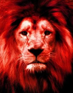 Browse all of the Jesus Lion photos, GIFs and videos. Find just what you're looking for on Photobucket