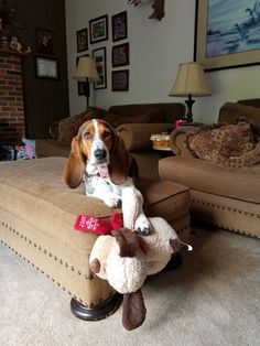 - Basset Hound World Bassett Hound, Roxy, Puppy Love, Bliss, Puppies, Pictures, Photos, Cubs, Basset Hound
