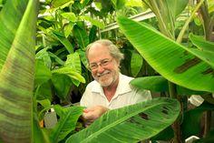 #QUT develops Golden #Bananas High in Pro-Vitamin A