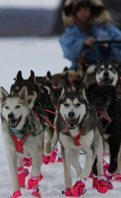 Overnight Alaskan Dogsled Expedition with an Iditarod Legend - my dream trip.