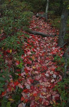 the red carpet, Gertrude's Nose Trail, Minnewaska State Park, New Jersey