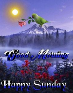 Good Morning In Hindi, Good Morning Happy Sunday, Good Morning Wishes, Funny Animal Videos, Funny Animals, Rose Flower Wallpaper, Days Of Week, Krishna Images, Beautiful Roses