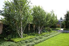 współczesny ogród