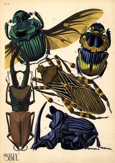 Beetles by EA Seguy (1889–1985). 1. Phaneus conspicillatus. Brésil; 2. Phanoeus imperator. Argentine; 3. Cyclommatus tarandus. Bornéo; 4. Pachilis gigas. Mexique; 5. Phanoeus ensifer. Guyane. 1920s (ca.1928) insect pochoir (stencil). Paris: Éditions Ducharte et Van Buggenhoudt