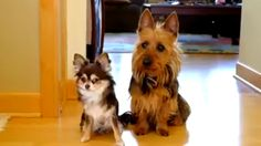 That awkward moment when your dogs start snitchin on each other... That awkward moment when your dogs start snitchin on each other... http://lsa.io/jksczW Click to see this picture...