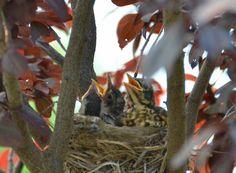 听见妈妈叫声的鸟宝宝们