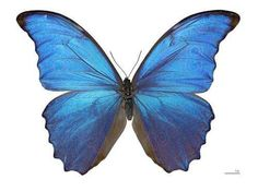 butterfly could hold the key to developing new highly selective gas detection sensors.