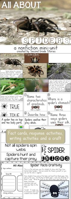 An easy low prep way to study spiders - spider facts, 3 sorts a walk the room activity, writing activities and a fun and easy craft.