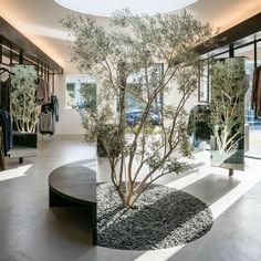 An olive tree grows from a patch of gravel towards a circular skylight in this Los Angeles store, which was designed by local studio Dan Brunn Architecture. Retail Interior, Office Interior Design, Office Interiors, Hotel Interiors, Interior Modern, Interior Garden, Interior Exterior, Tree Interior, Kitchen Interior