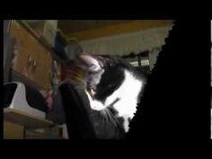 Meus gatinhos 2009 .flv