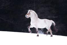 — Fjord Horse. #winter #snow #white #black