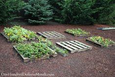 Growing strawberries in pallets