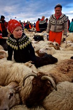 Iceland Sheep Round-Up, Rangarvallasysla, Iceland, 2012, photograph by Jessi Kingan.