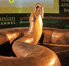 a life-size model of the 60-million-year-old titanoboa (snake) has taken stage at grand central's vanderbilt hall