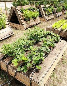 Small Vegetables Garden for Beginners_16 #gardenforbeginnersideas