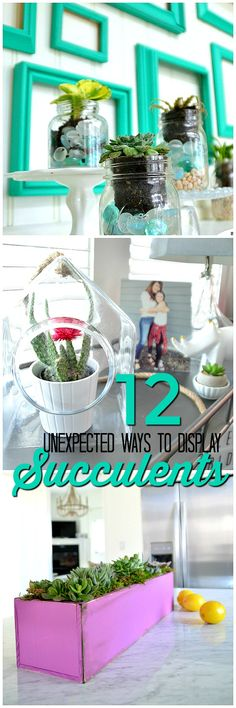12 unexpected ways to display succulents