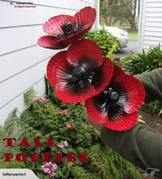 POPPIES ~ TALL RED ~By Wayne Morrison~ BUNCH OF 5 | Trade Me