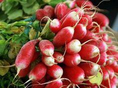 Cherry Belle #radishes #grow super fast.