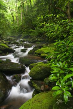 Streaming Through The Forest at Great Smokey Mountains National Park, Tennessee © Mark Rasmussen