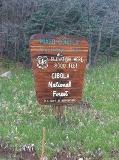 Photo of Cibola National Forest