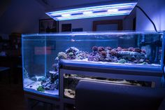 The Austrian Drop Off Tank - Reef Central Online Community