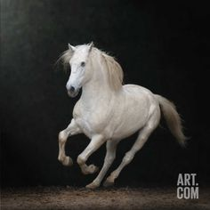 Art.com   Collect & Share art in your own gallery with You+Art