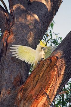 """""""10 Best Cities for Bird Watching"""" - @Susan Farewell / FarewellTravels"""