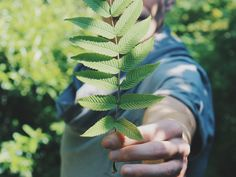 Warum wir uns nicht ständig ablenken lassen sollten Enorm, Plant Leaves, Plants, Temple, Plant, Planting, Planets