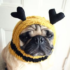 I doubt they make these for my big dog's heads but super cute, good gift idea...May work in the family pic.