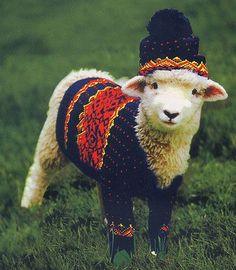 Çirkin bir Kazak sevimli Koyun