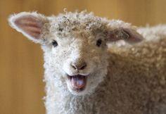 Nashville Zoo - Nashville Zoo 2012 Photo of the Week: Baby Lamb Farm Animals, Animals And Pets, Funny Animals, Cute Animals, Smiling Animals, Funny Pets, Funny Jokes, Beautiful Creatures, Animals Beautiful