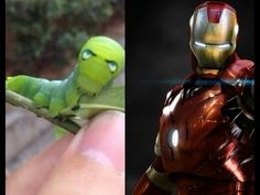 Video Ulat Mirip SuperHero Iron Man