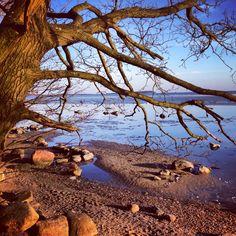 Boddenküste #rügen
