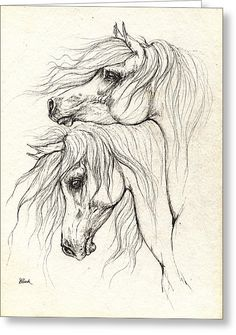 Two Arabian Horses Drawing Greeting Card by Angel Tarantella