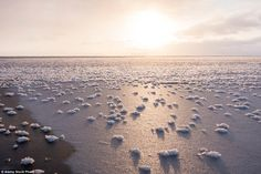 Snow or frost flowers are ice crystals commonly found on young sea ice in extremely cold, ...