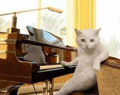 可愛すぎて疲れもぶっ飛び!!Twitterで話題の癒されMAX猫ちゃん画像集   猫クラスタ   22ページ目