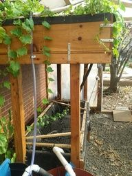 Aquaponic system a real STEM-STEAM project.