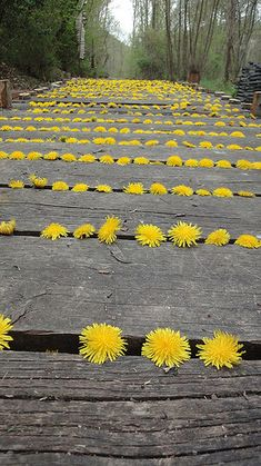 Inspired by Andy Goldsworthy: Natural Land Art for Kids: Dandelion art project inspired by Andy Goldsworthy Land Art, Art Et Nature, Nature Crafts, Art Conceptual, Art Environnemental, Art Public, Dandelion Art, Dandelion Yellow, Ephemeral Art