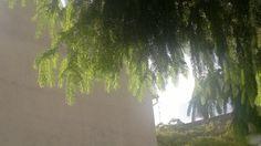 Lichtblick Himmelblau durch Baum und Beton