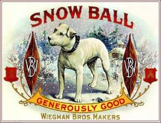 Snow Ball English Bull Terrier Dog Vintage Tobacco Cigar Box Crate Label Print | eBay