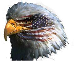 Patriotic Eagles Wallpaper Patriotic Eagle With Flag Clipart Patriotic Eagle USA Patriotic Eagle Tattoos Patriotic Eagle Pictur. I Love America, God Bless America, Hello America, America America, Sound Of Music, Adler Tattoo, Eagle Pictures, Patriotic Pictures, Eagle Images
