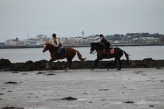 Anna riding Sandy at the beach & Vladdy riding Sahara the chestnut in front. This is the video of the ride taken on board Sahara. https://www.youtube.com/watch?v=OwA52pQ4eqQ #loveirishhorses #horseforsale