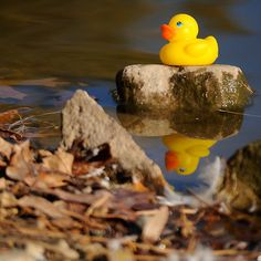 A relaxing day at the pond  https://www.facebook.com/#!/laruecherie  copyright: laruecherie photography   www.laruecherie.com