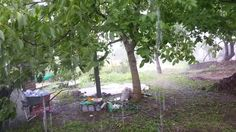 A Tiny Farm - Current Situation - The Nursery - Finally we got some rain ! Part 1