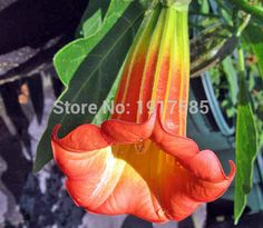Cheap seed favors, Buy Quality seed can directly from China seeds orchid Suppliers:  start