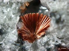 Tuperssuatsiaite, Aris Quarry, Windhoek, Namibia. Red-brown needle-like crystals. Fov 2.5 mm Collection/Copyright: geni